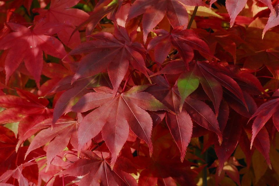 Background, Autumn, Nature, Season, Bright, Wine