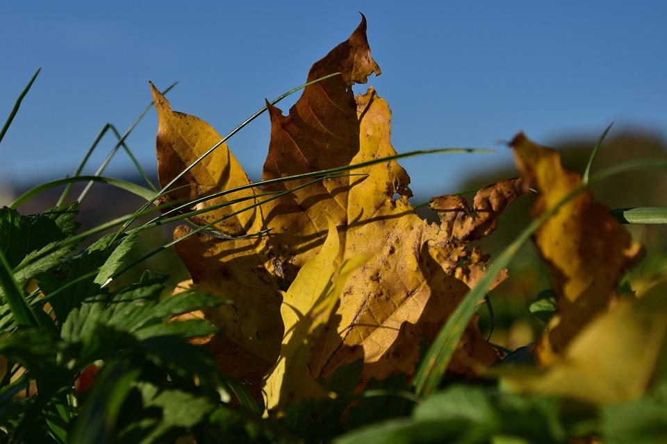 Sheet, Autumn, Colors, Season