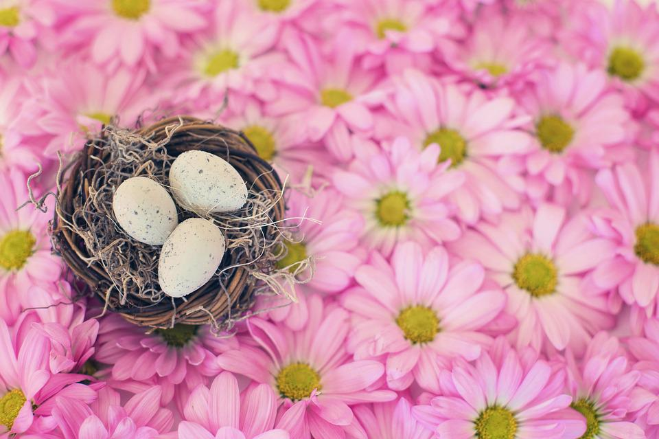 Bird's Nest, Bird Eggs, Pink Daisies, Spring, Season
