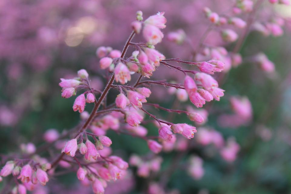 Bloom, Spring, Blossom, Springtime, Blooming, Season