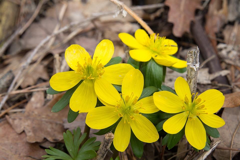 Nature, Plant, Leaf, Flower, Season, Spring, Blossom
