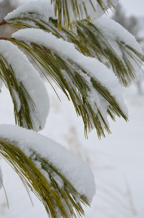 Nature, Winter, Season, Outdoors, Closeup, Snow, Color