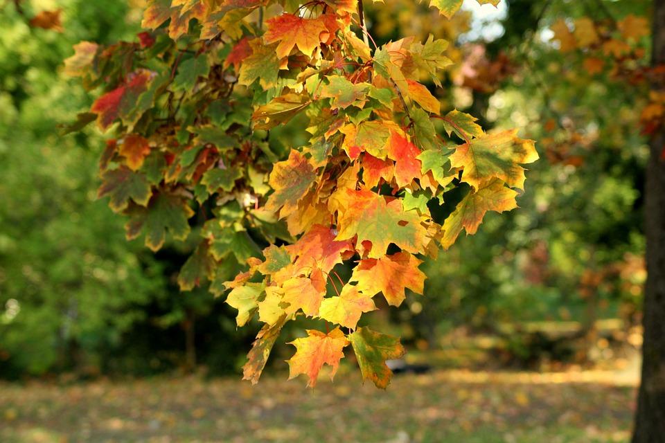 Autumn, Colorful Leaves, Autumn Landscape, Season