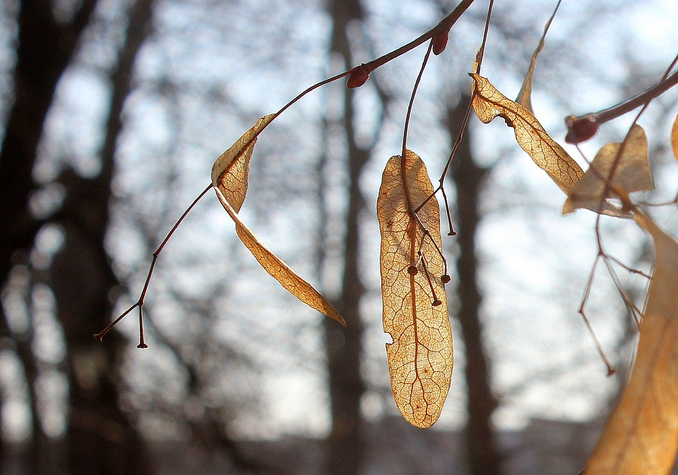 Tree, Nature, Leaf, Dry Leaves, Season, Branch, Winter