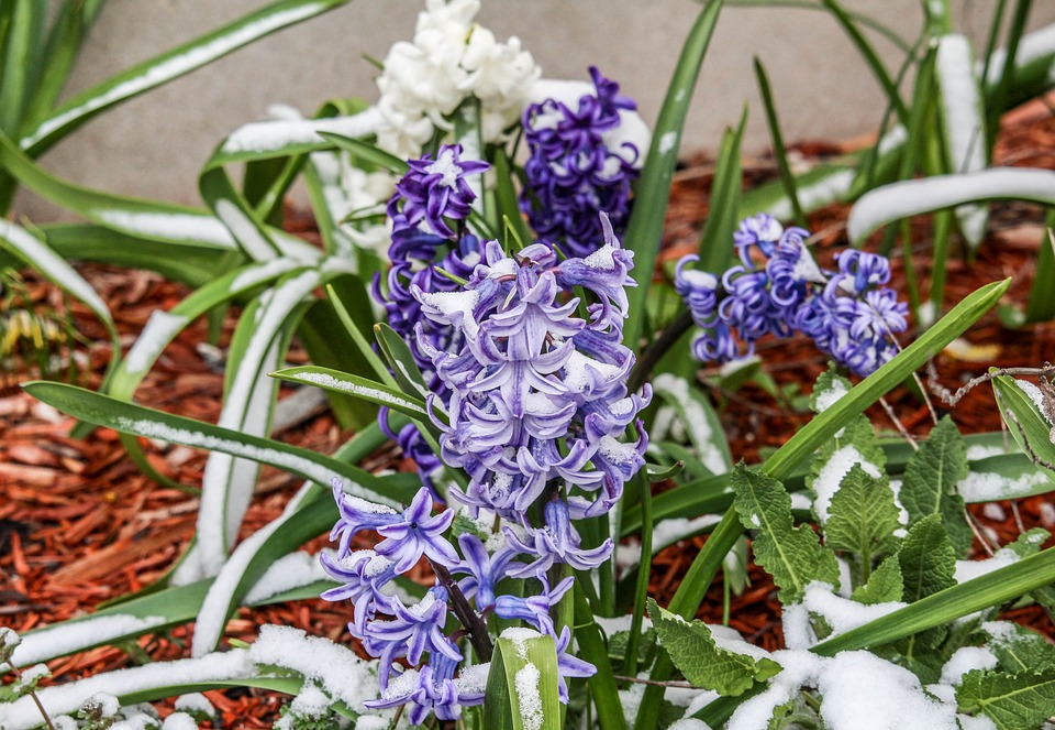 Flower, Nature, Flora, Floral, Season