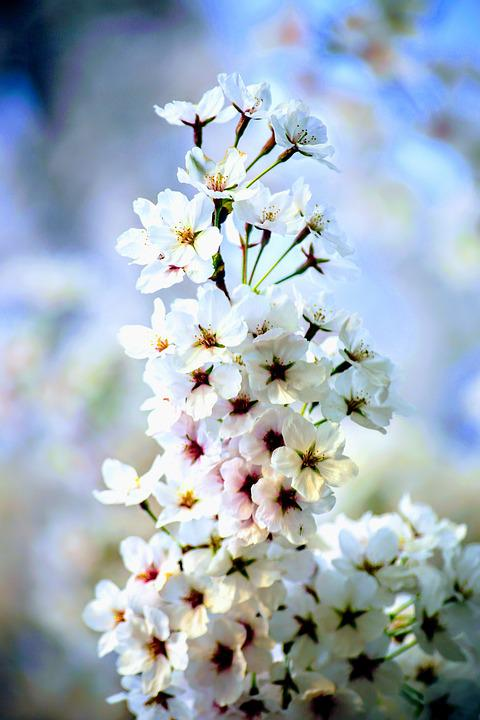 Flower, Flora, Nature, Season, Petal
