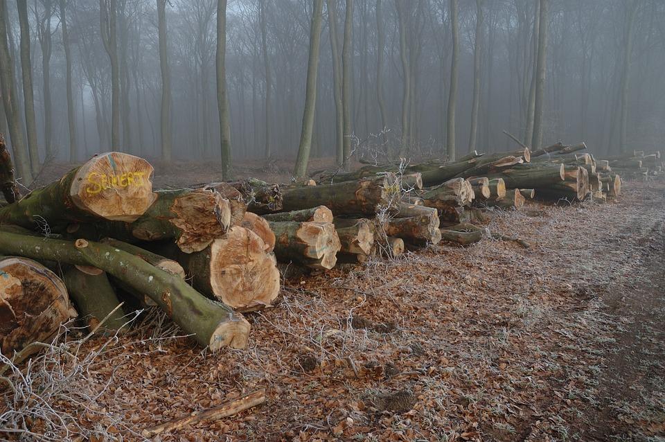 Forest, Outdoor, Season, Misty, Foggy, Logs, Pile, Wood