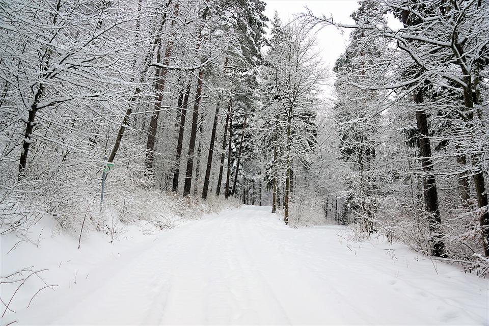 Winter, Snow, Cold, Frost, Wood, Frozen, Season, Tree
