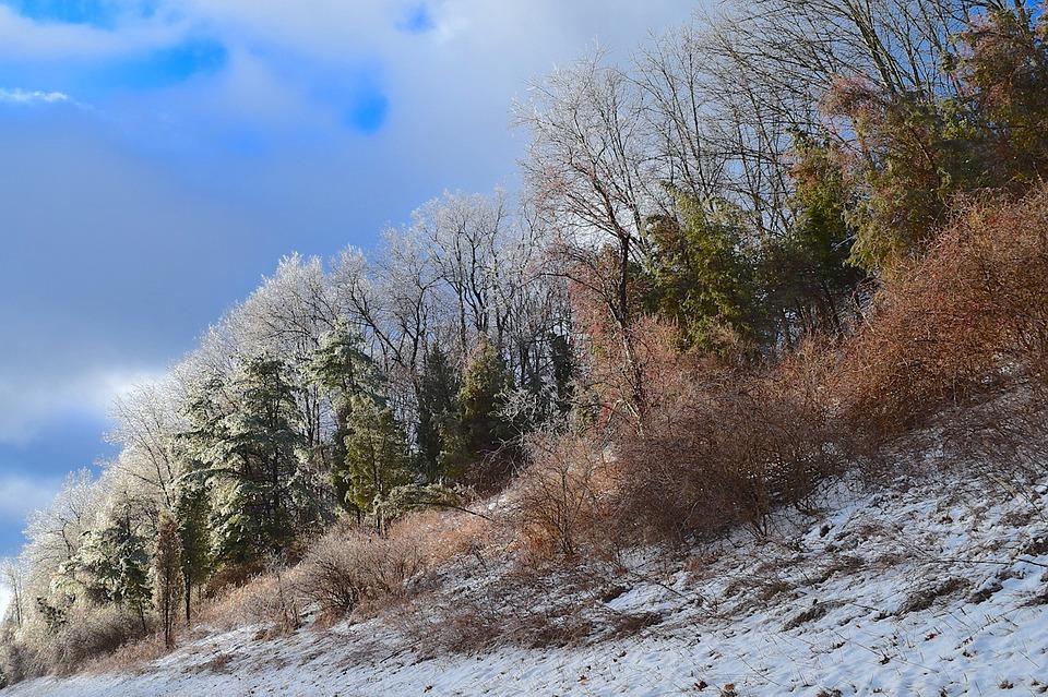 Ice, Trees, Nature, Landscape, Season, Snow, Winter