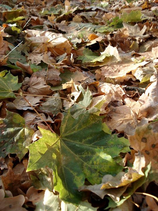 Autumn, Leaves, Yellow, Leaf Litter, Season, Leaf
