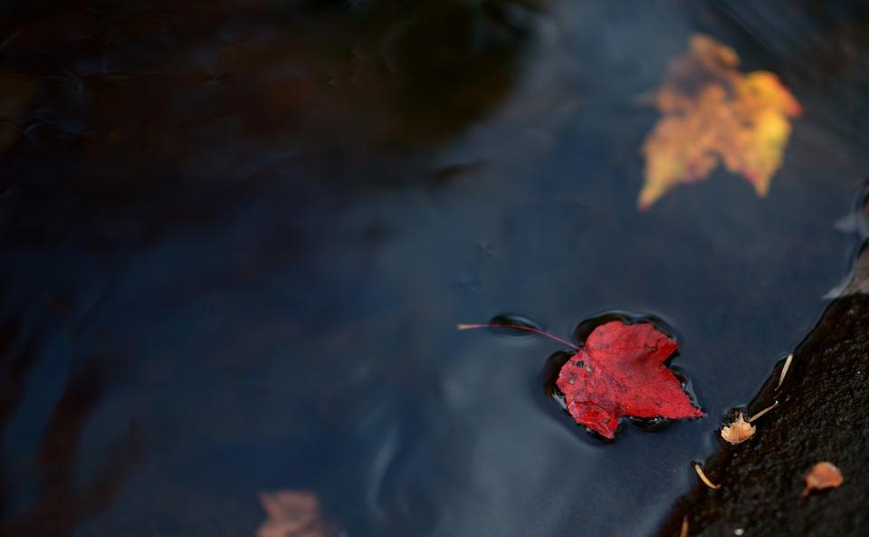 Leaf, Leaves, Autumn, Red, Colour, Season, Stream