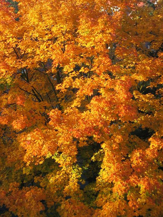 Autumn, Nature, Colors, Colour, Gold, Bile, Season