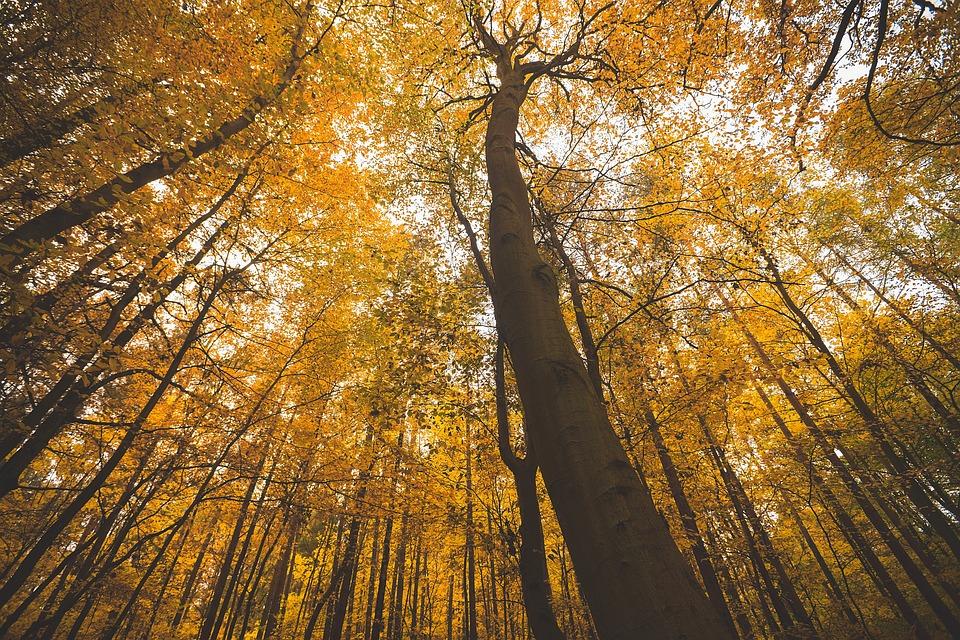 <b>Autumn Park</b> Background, <b>Fall</b>. Beautiful <b>Nature</b> Scene Of <b>Autumn</b> ...