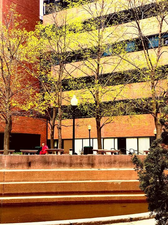 Fall, Park, Yellow, Season, Relax, Read, Tree, Autumn