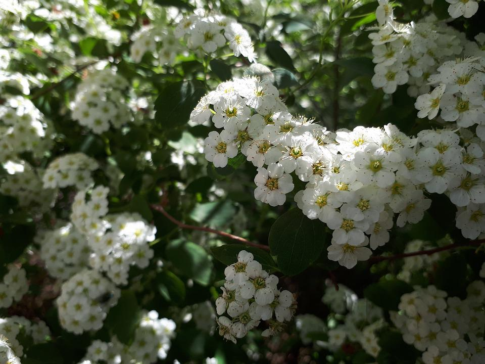Flower, Plant, Nature, Season, Sheet, Tree, Garden