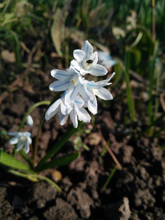 Nature, Plant, Flower, Season