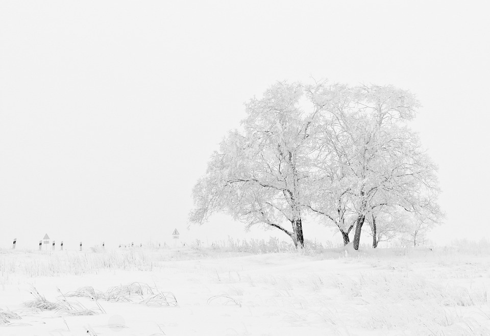 Winter, Nature, Season, Trees, Snow, White, Cold, Frost
