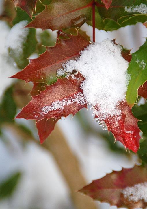 Sheet, Season, Winter, Christmas, Snow, Snowy, Red