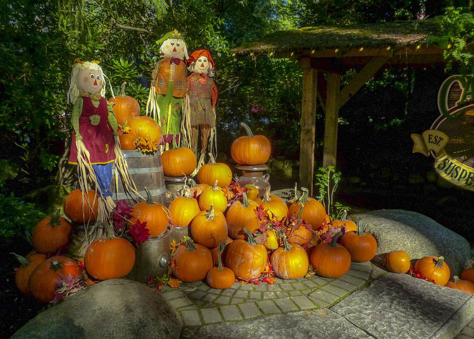 Autumn, Pumpkin, Still Life, Fall, Season, Harvest
