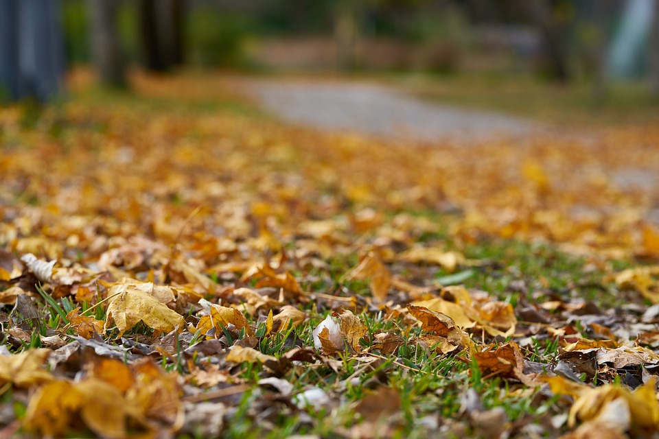 Autumn, The Leaves Are, Street, Park, Season, Romantic