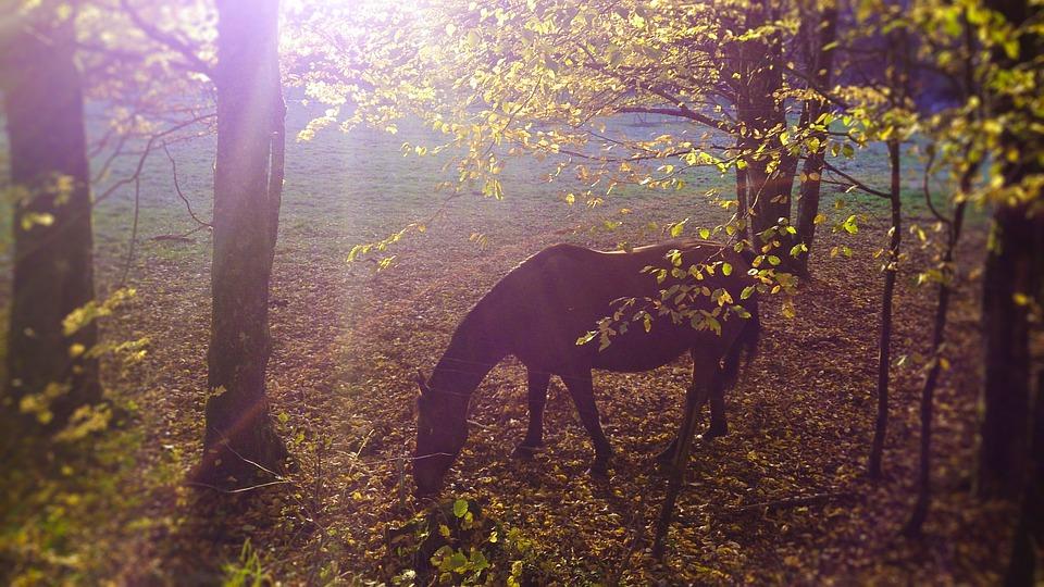 Tree, Nature, Wood, Dawn, Outdoor, Fall, Season