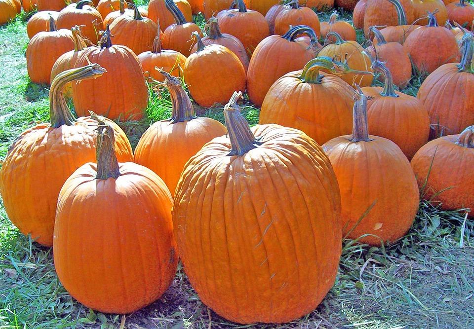 Pumpkins, Autumn, Fall, Halloween, Seasonal, Harvest