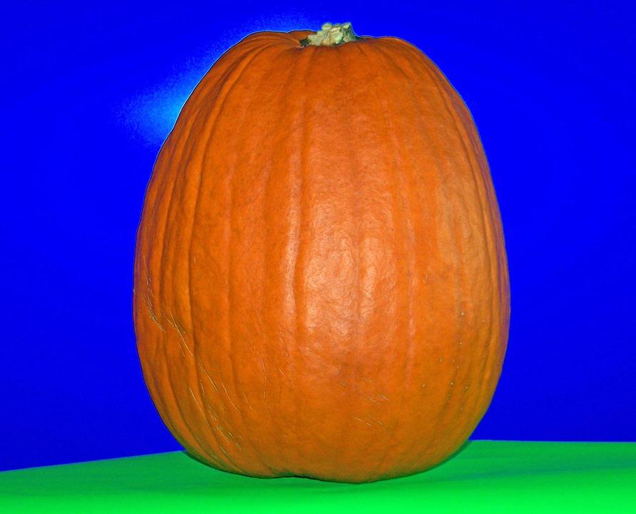 Pumpkin, Autumn, Fall, Halloween, Celebration, Seasonal