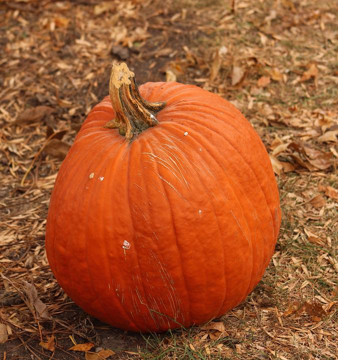 Pumpkin, Fall, Harvest, Halloween, Seasonal