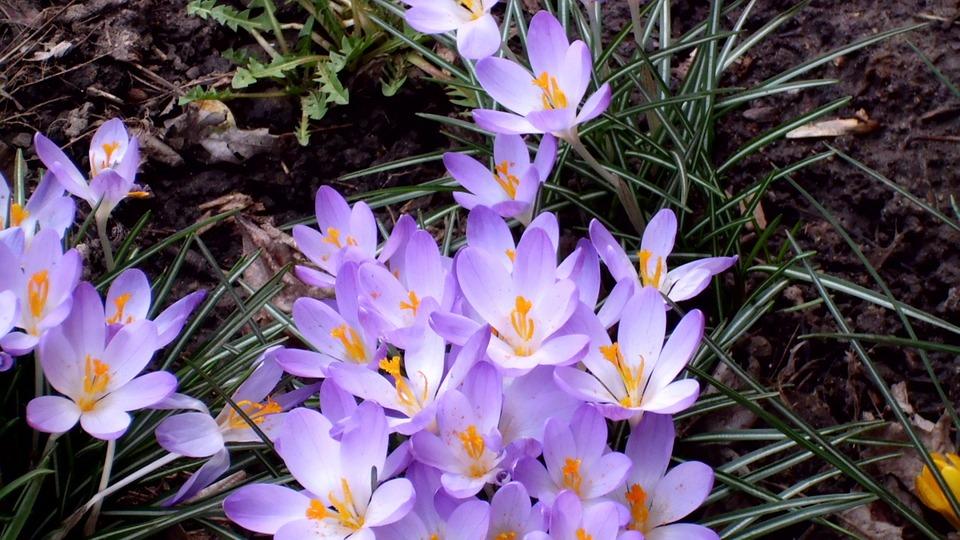 Flowers, Purple, Spring, Seasons