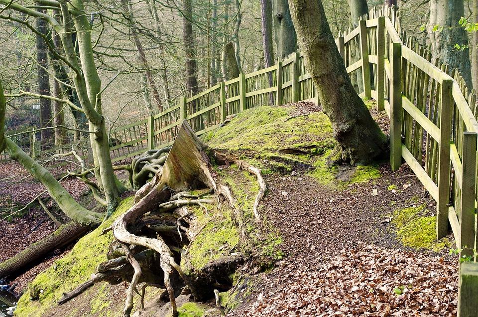 Forest, Tree, Trees, Branch, Twig, Trip, Seasons