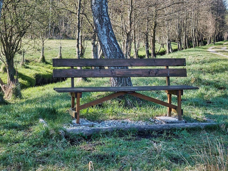 Wooden Bench, Trees, Seat, Bench, Park, Grass, Recovery