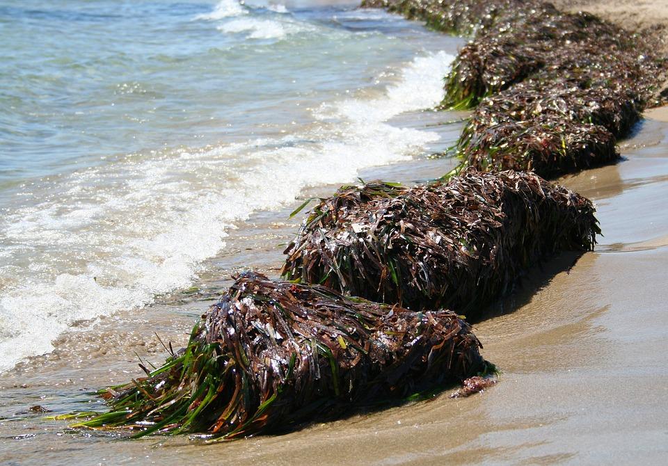 Seaweed, Sea, Mediterranean, Beach, Summer