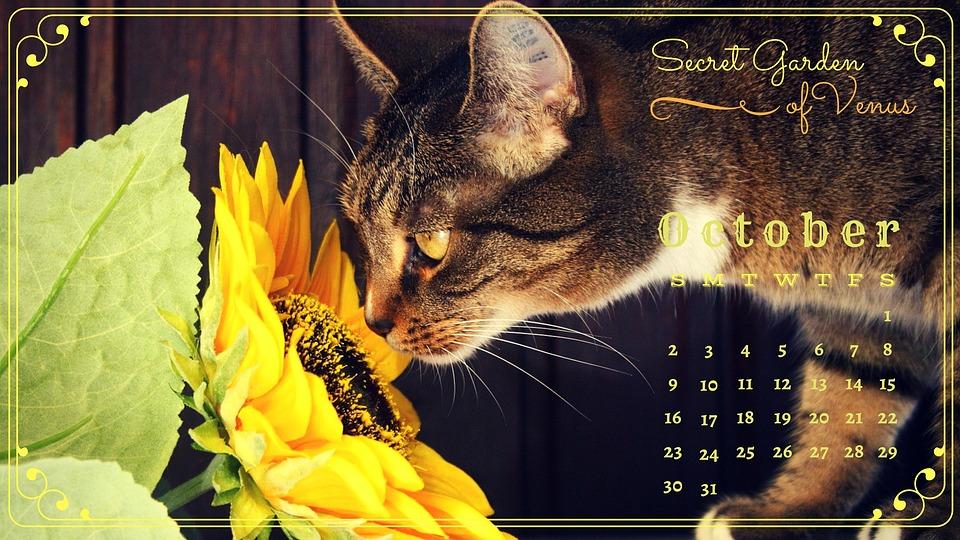 Secret Garden Of Venus, Calendar, October, Cat