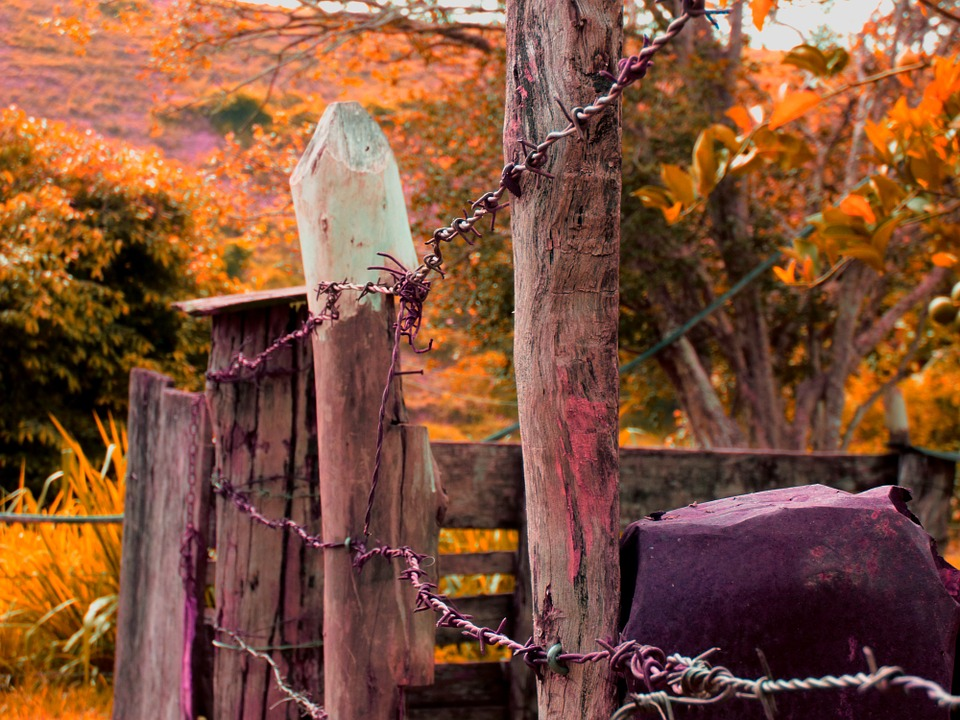 About, Wood, Security, Old, Farm, Boi, Cattle