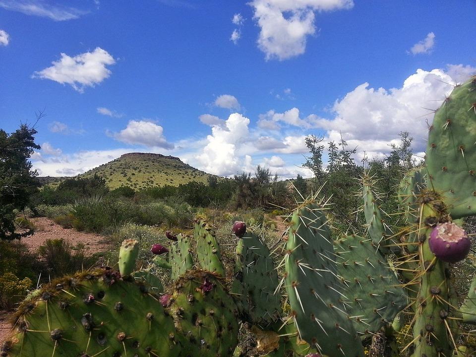 Cactus, Desert, Sedona, Arizona, Nature, Mountain