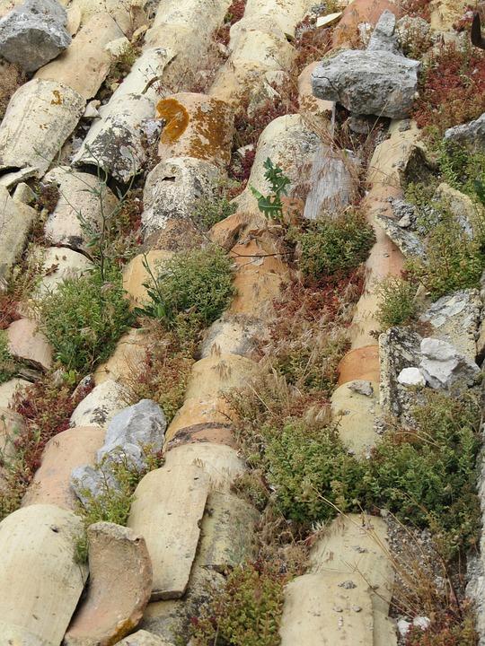 Roof Tiles, Old, Succulents, Sedum, Moss, Green, France