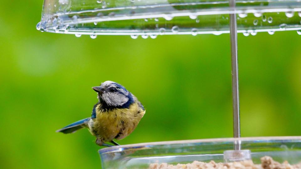 Birds, Birdfeeder, Garden, Nature, Feeding, Seeds, Cute
