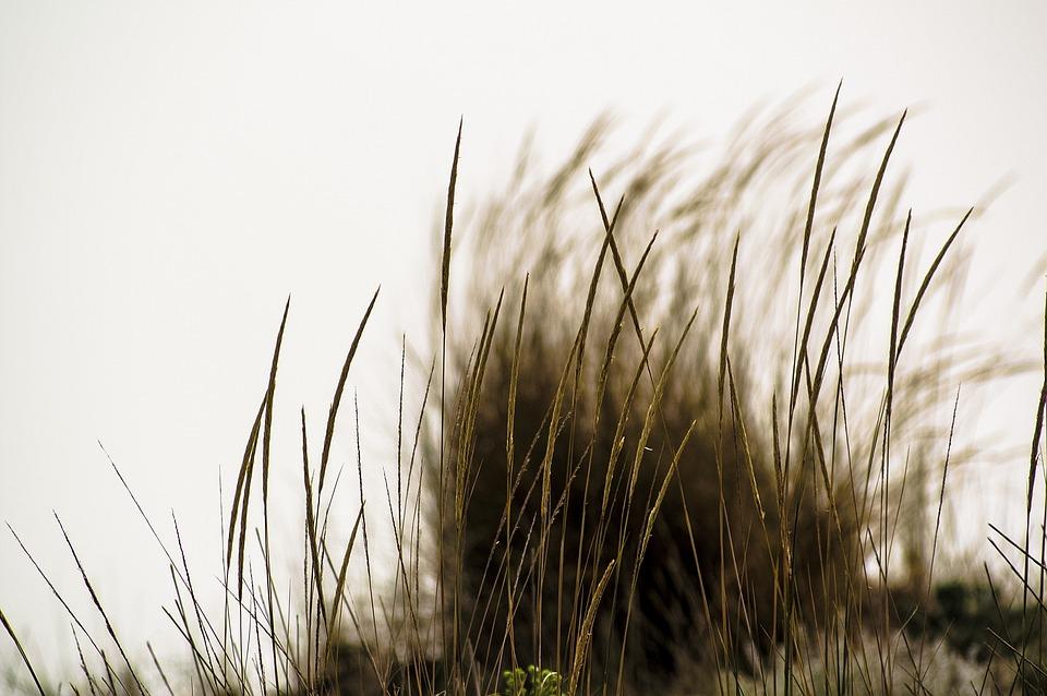 Sea, Grass, Seeds, Wind