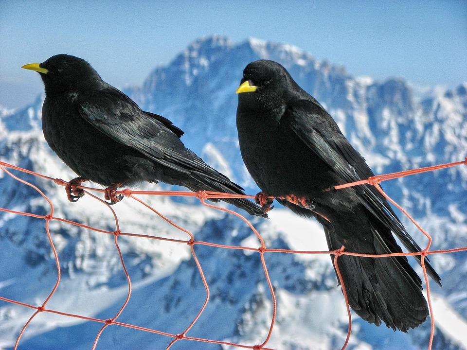 Bird, Seer, The Dolomites, Mountains, Marmalade, Snow
