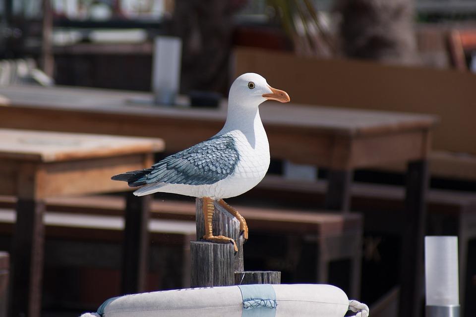 Bird, Seagull, Water Bird, Seevogel, Close, Statue