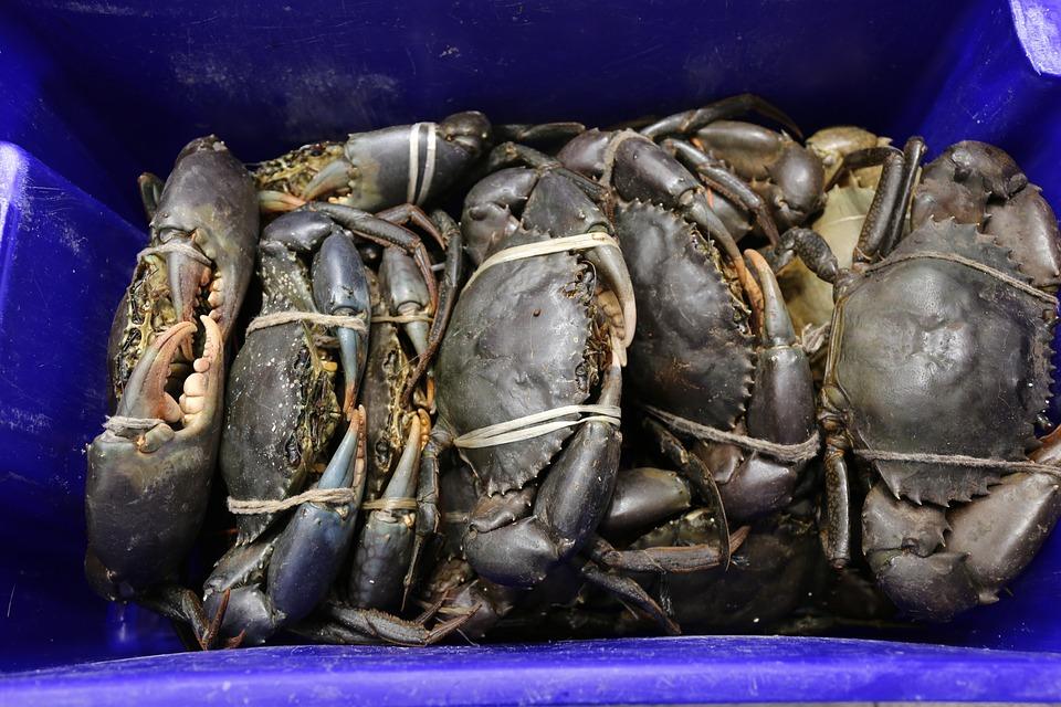 Fish, Market, Sell, Seafood, Food, Fresh, Fishing