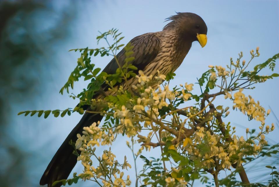 Wildlife, Bird, Nature, Animal, Wild, Outdoors, Senegal