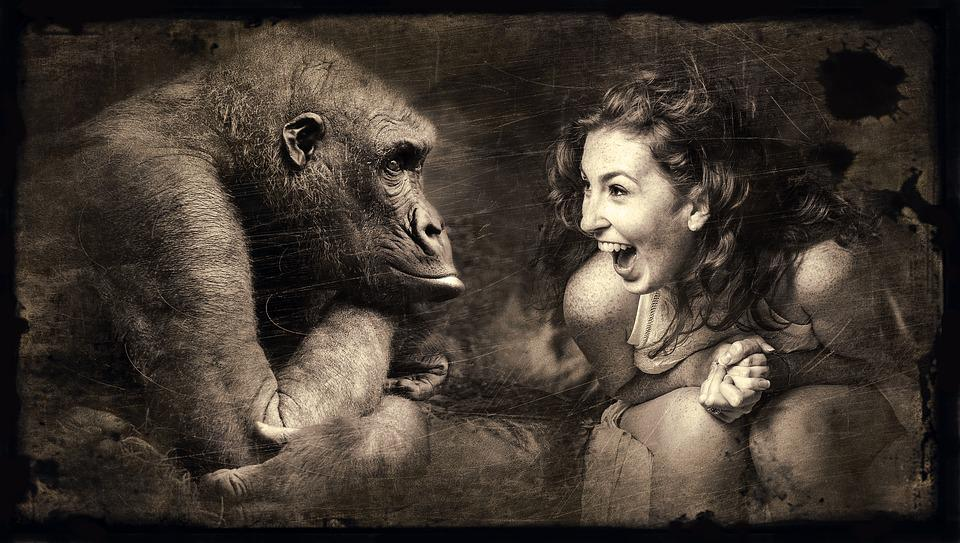 Composing, Monkey, Woman, Laugh, Old Photo, Sepia