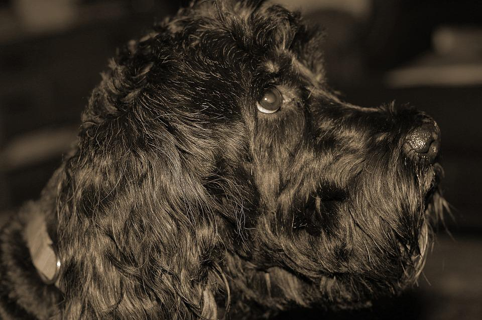 Dog, Worried, Sepia, Pet, Animal, Canine, Worry, Friend