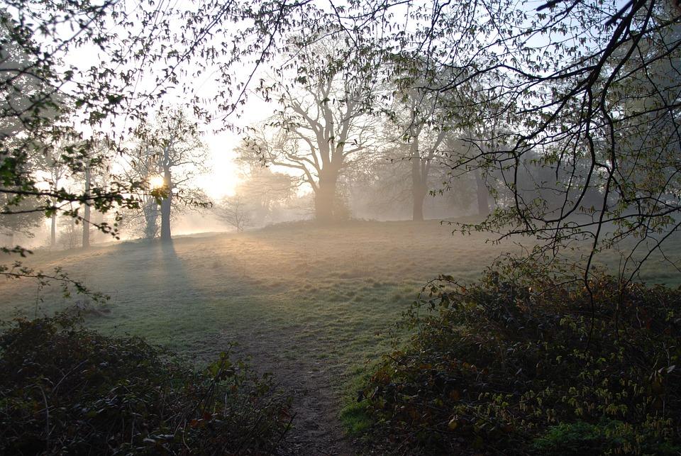 Fog, Misty, Morning, Sunrise, Trees, Serene, Peaceful