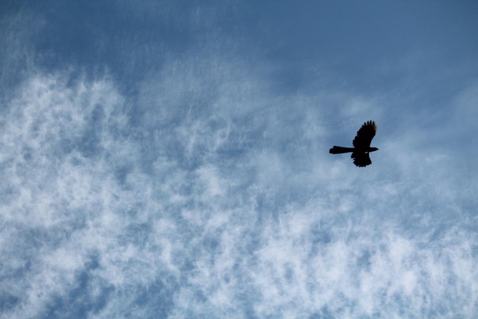 Sky, Bird, Flying, Blue, White Clouds, Pattern, Serene
