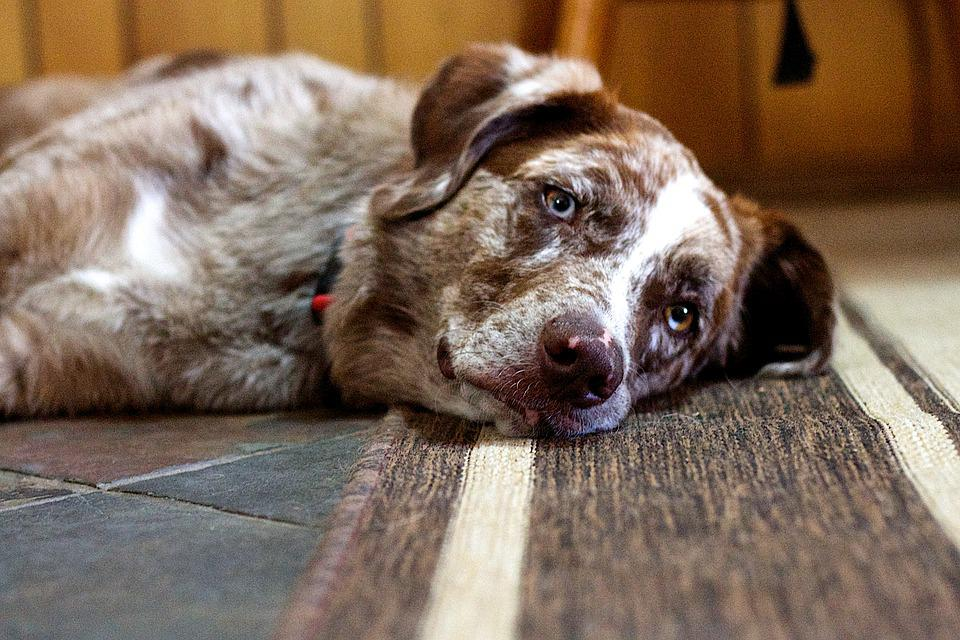 Dog, Serenity, Sleep, Thoughtful