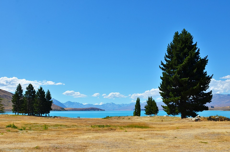 Serenity, Lakefront, Tree, New Zealand