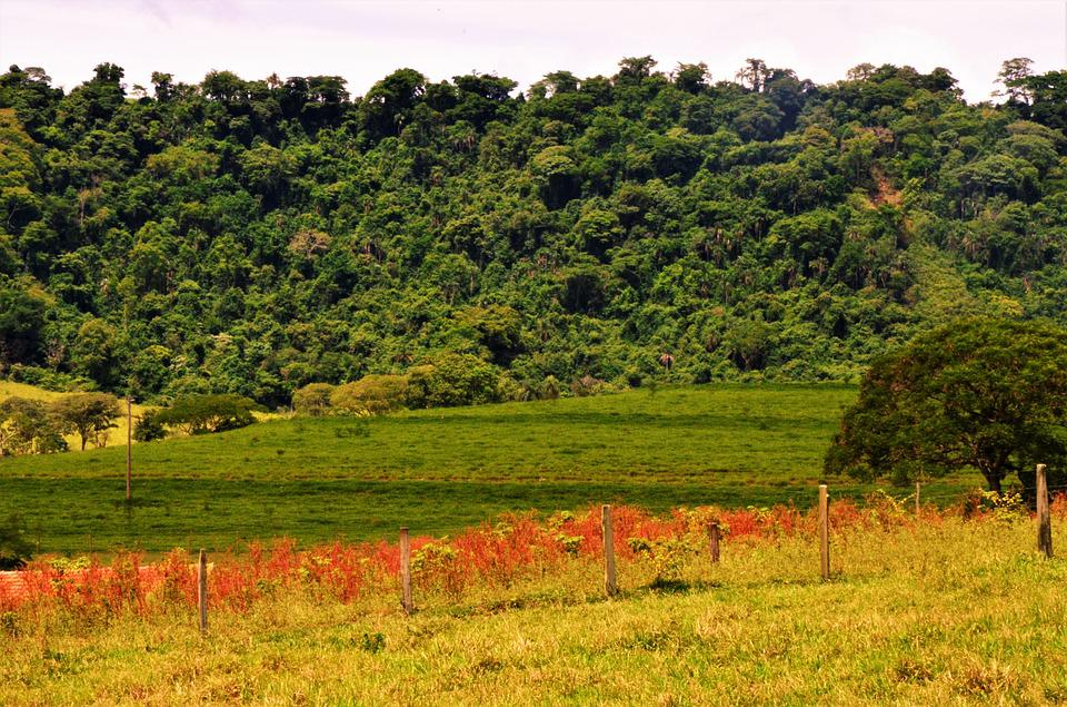 Landscape, Green, Serrated, Brazil, Rural