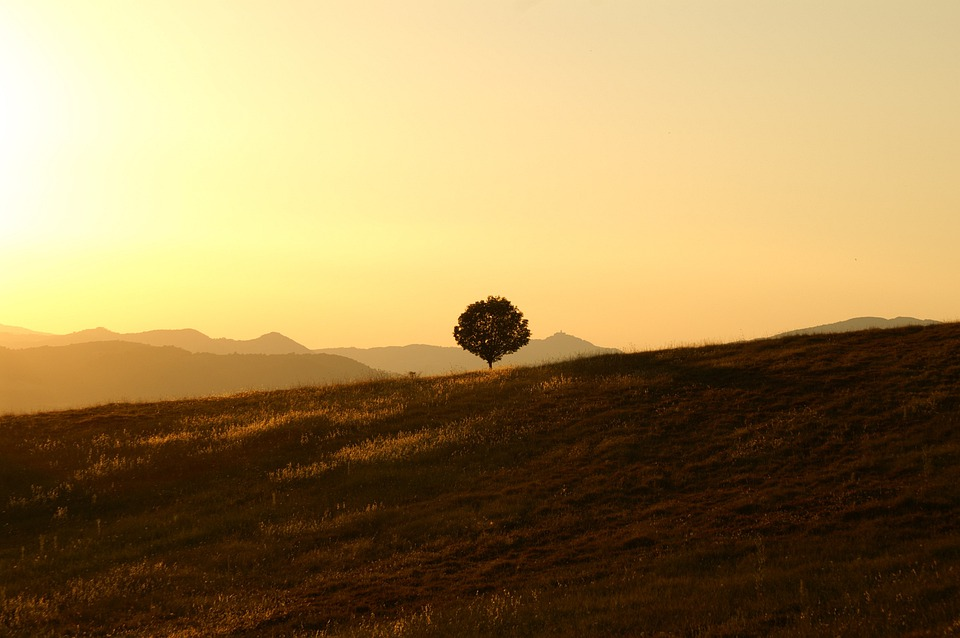 Tree, Solitary, Landscape, Umbria, Setting Sun, Sunset